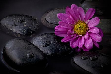 black stones: The flower on river stones spa treatment scene on black background zen like concepts. Stock Photo