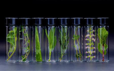Flesje etherische olie met kruid heilige basilicum bloemen, rozemarijn, oregano, aloë vera, salie, basilicum en munt op zwarte achtergrond.