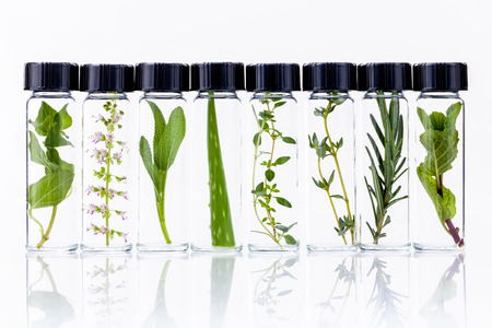 Bottle of essential oil with herb holy basil flowers, rosemary,oregano, aloe vera, sage,basil and mint on white background.