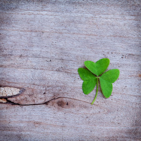 luckiness: Close Up clovers leaves setup on rustic wooden background. Stock Photo