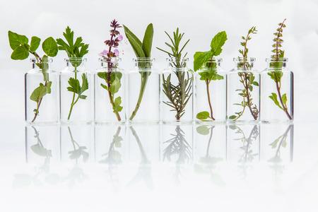 흰색 배경에 허브 거룩한 바질 잎, 로즈마리, 오레가노, 세이지, 바질과 민트 에센셜 오일의 병입니다.