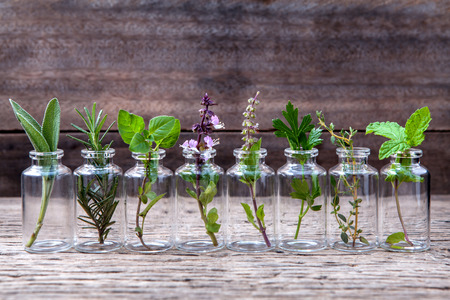 Flasche ätherisches Öl mit Kräutern Basilikum Blume, Basilikum Blume, Rosmarin, Oregano, Salbei, Petersilie, Thymian und Minze auf alten hölzernen Hintergrund einrichten.