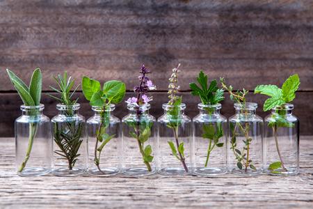 Flesje etherische olie met kruiden heilige basilicum bloem, basilicum bloem, rozemarijn, oregano, salie, peterselie, tijm en munt opgericht op oude houten achtergrond.