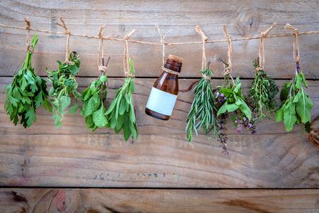 Assorted hanging herbs