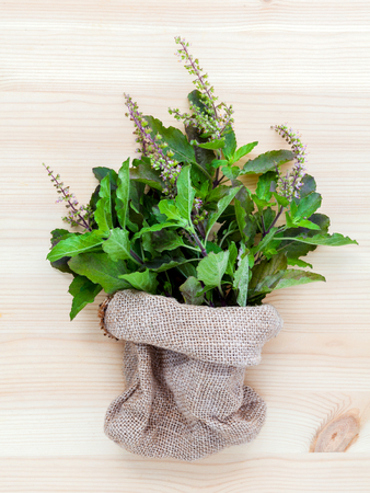 tulsi: Branch of fresh red holy basil and holy basil flower from the garden in hemp sack bag on wooden background.