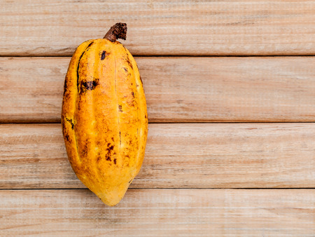 Ripe Indonesias cocoa  setup on rustic wooden background.