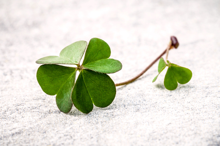 luckiness: Clovers leaves  on Stone .The symbolic of  Four Leaf Clover the first is for faith, the second is for hope, the third is for love, and the fourth is for luck. Clover and shamrocks is symbolic dreams .