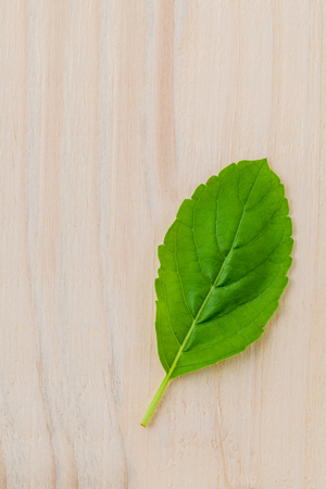 tulsi: Alternative medicine fresh holy basil leaves on wooden background. Rama Tulsi. Holy basil  the queen of herb.