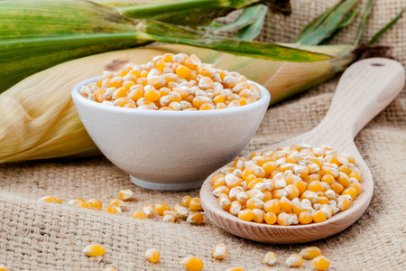 Grains of dried corn in the wooden spoon with dried sweet corn on hemp sacks background .