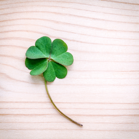 luckiness: Clovers leaves on Stone .The symbolic of Four Leaf Clover the first is for faith, the second is for hope, the third is for love, and the fourth is for luck. Clover and shamrocks is symbolic dreams . Stock Photo
