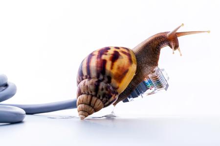 느린 인터넷 연결을위한 rj45 커넥터 상징적 인 사진 달팽이. 광대역 연결은 어디서나 사용할 수 없습니다.