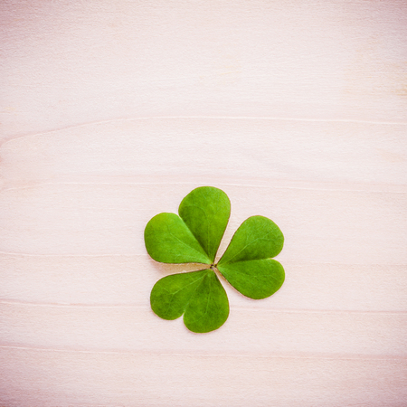 luckiness: Toned of clover leaf on wooden background