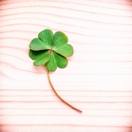 luckiness: Toned of clovers leaves on wooden background .The symbolic of Leaves Clovers the first is for faith the second is for hope the third is for love. Clovers and shamrocks is symbolic dreams .