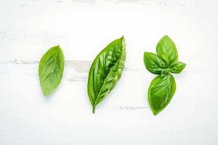 Fresh sweet green basil leaves on white shabby wooden background.