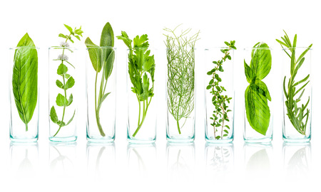 herbalism: Close Up bottles of essential oils with fresh herbs . Sage, rosemary, sweet basil leaves ,lemon thyme ,parsley and peppermint branch isolated on white background.