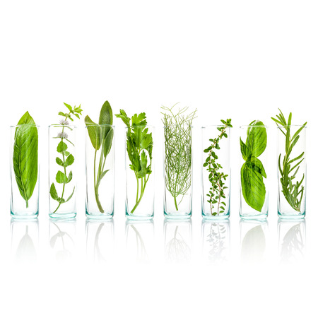 Sage, rosemary, sweet basil leaves ,lemon thyme ,parsley dill and peppermint branch isolated on white background.