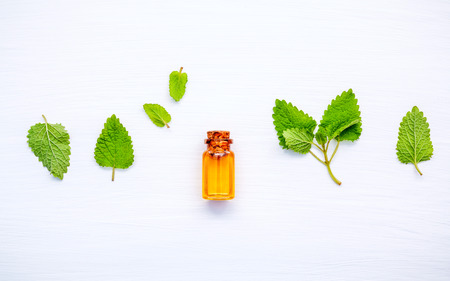 Bottle of essential oil with fresh lemon balm leaves setup with flat lay on white wooden table. Melissa tincture essential oil in glass bottle with fresh leaves flat lay and copy space.