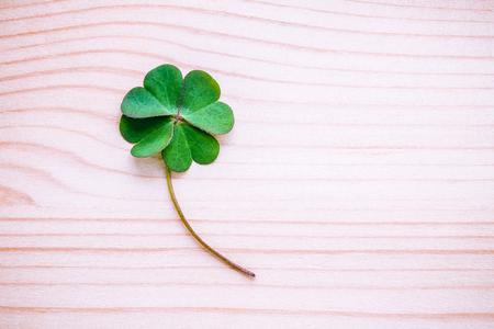 클로버 초라한 나무 배경에 나뭇잎. 첫 번째는 네 잎 클로버의 상징이며, 두 번째는 희망을위한 것이고, 세 번째는 사랑을위한 것이고, 네 번째는 운을 스톡 콘텐츠