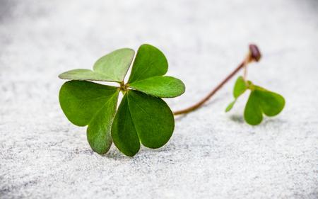 石の上のクローバーの葉。4 つ葉のクローバー最初の象徴的な信仰は、希望、2 番目、3 番目は愛、4 番目は、運。クローバー シャムロックは、象徴的な夢です。