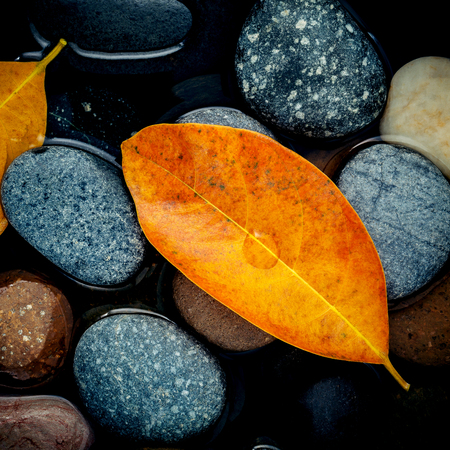 Autumn season and peaceful concepts. Orange leaf on river stone . Abstract background of autumn leaf on black stone with water drop. Banco de Imagens