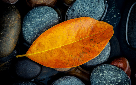 Autumn season and peaceful concepts. Orange leaf on river stone . Abstract background of autumn leaf on black stone with water drop. Stock Photo