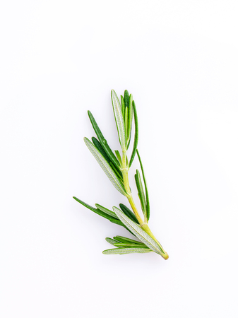 Branch of fresh rosemary  isolated on white background.