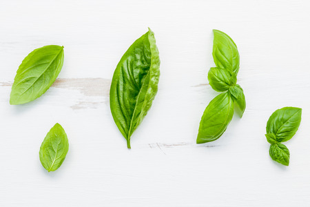 Fresh sweet green basil leaves on  white shabby wooden background. Sweet basil leaves with flat lay . Stock Photo