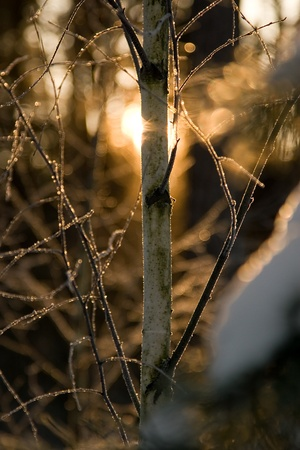 diffraction: hoarfrost on birch with light diffraction Stock Photo
