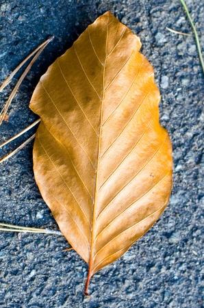 A golden leaf