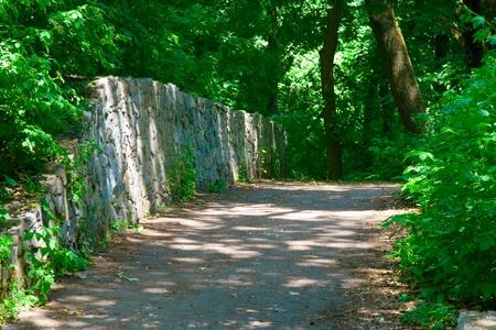 静かな緑豊かな公園での経路