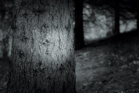 暗い森 写真素材 - 11909476
