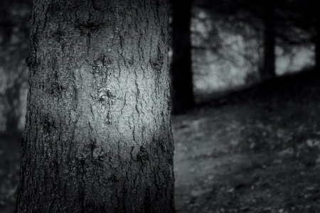 dark forest photo