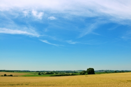 wheat field, tree and blue sky photo
