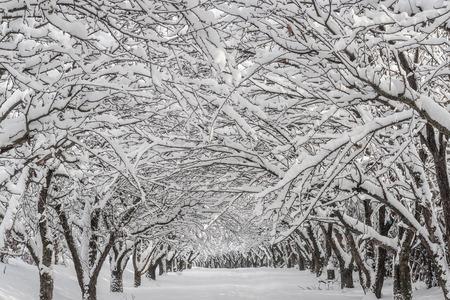 公園の雪に覆われた冬の風景