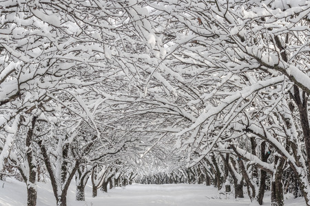 snowy winter landscape in a park Stock Photo