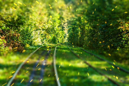 magic autumn forest and tram path, tilt-shift effected photo with particles Stock Photo