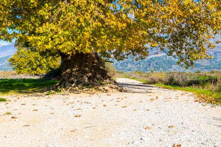 Tree on the road to Hadrianopolis at Gjirokaster town, Albania