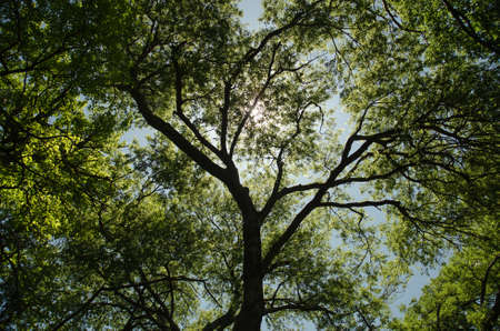 tall tree: The Sun Between the Trees