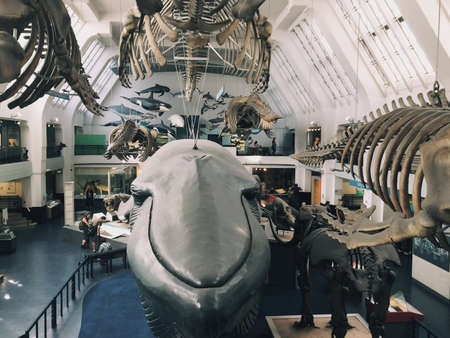 natural history museum: Blue whale at natural history museum London