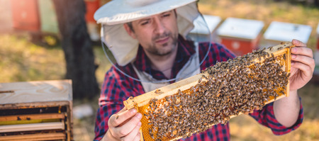 Beekeeper checking his honey bees and beehives Stock Photo