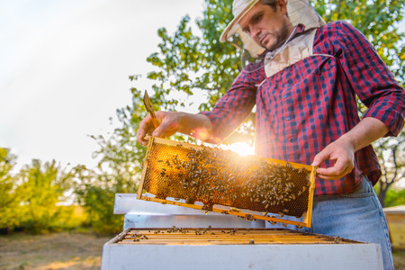 Beekeeper checking his honey bees and beehives Stock Photo - 81038970