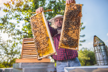 Beekeeper checking his honey bees and beehives while holding frames Stock Photo