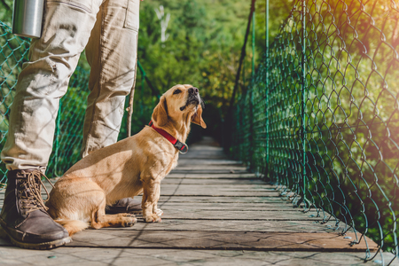 Hiker with small yellow dog standing on the wooden suspension bridge 免版税图像 - 85011165