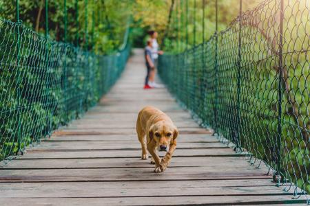 Malý žlutý pes na dřevěném závěsném můstku