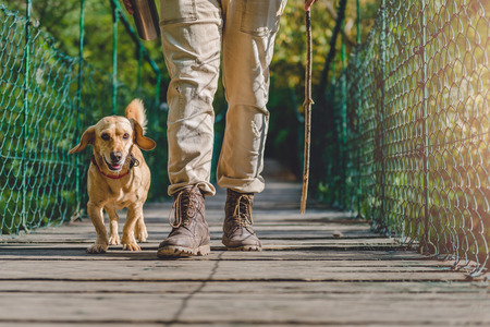 Hiker with small yellow dog walking over wooden suspension bridge in the forest