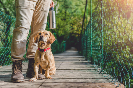 Hiker with small yellow dog standing on the wooden suspension bridge 免版税图像 - 84897676