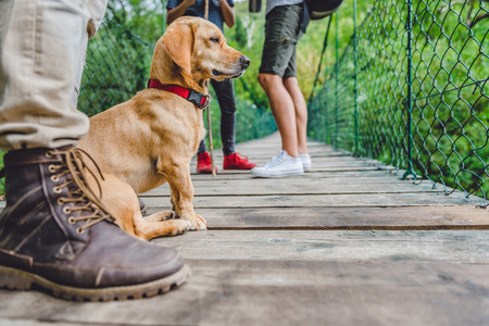 Small yellow dog with his owners sitting on the wooden suspension bridge and looking at distance 免版税图像