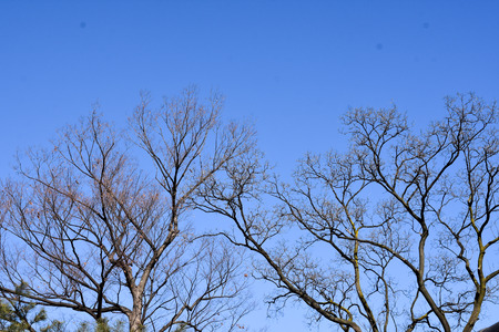 withered tree against blue sky