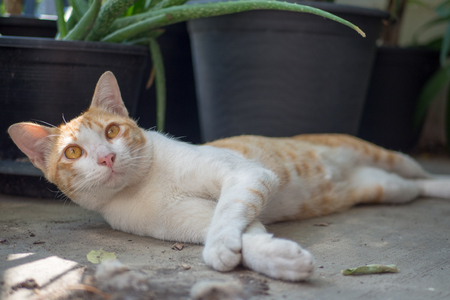 Portrait of a white and brown cat on the floor.