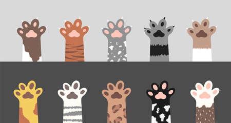 Fluffy cat paws collection. Set of various cute kitten foot silhouettes isolated on gray and white background. Animals and pets concept. Vector illustration in cartoon style.